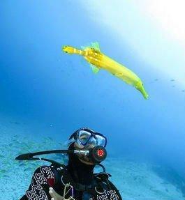 duiken in kaapverdie
